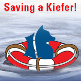 Saving Robin Kiefer – A Lifeguarding Story
